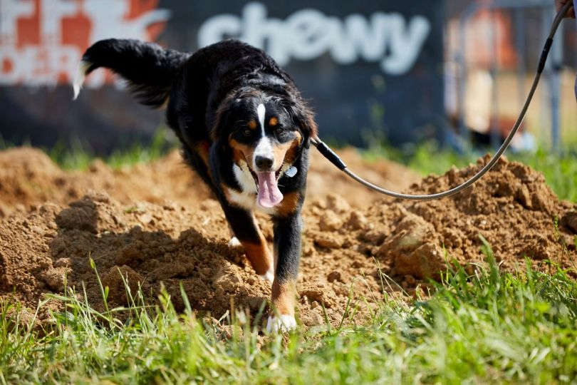 Ready, set, bark: Chewy partners with Tough Mudder on doggo